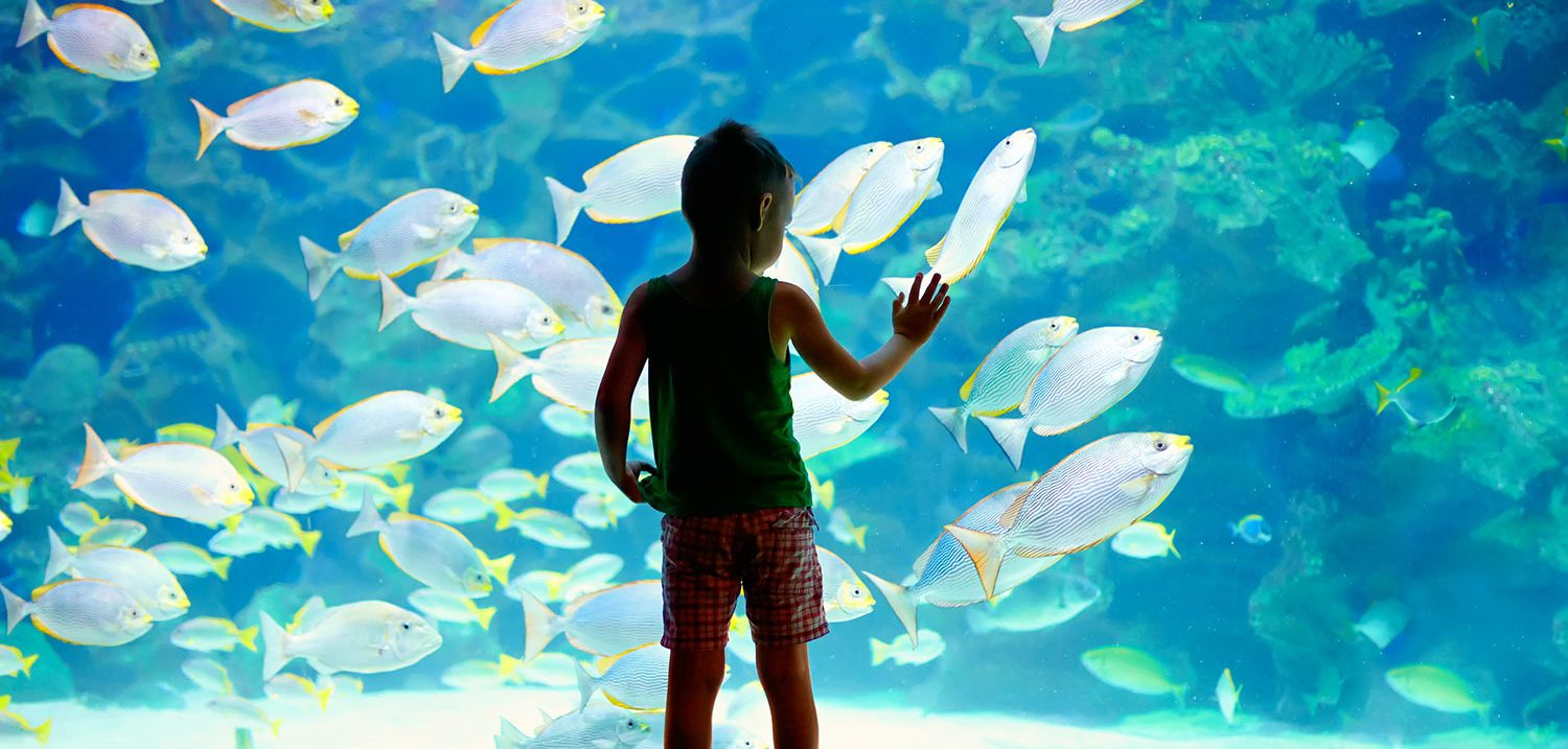 Children-Local-Area-Aquarium